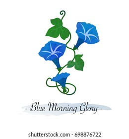Colorful watercolor texture vector botanic garden flower blue morning glory