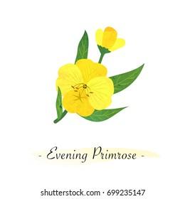 Colorful watercolor texture vector botanic garden flower yellow evening primrose