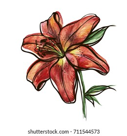 Colorful watercolor texture vector botanic garden flower red tiger lily