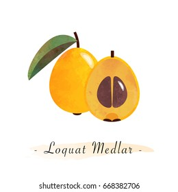 Colorful watercolor texture vector healthy fruit loquat medlar