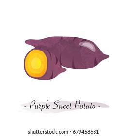 Colorful watercolor texture vector healthy vegetable purple sweet potato