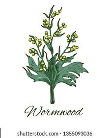 Colorful Wormwood hand drawn sketch. Retro botanical line art. Leaves and flowers. Medical herb and spice. Vintage wormwood branch. Herbal vector illustration isolated on white background
