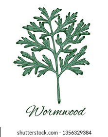 Colorful Wormwood hand drawn sketch. Retro botanical line art. Medical herb and spice. Vintage wormwood branch. Herbal vector illustration isolated on white background