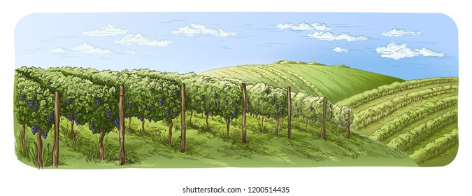 colorfull vine plantation hills, trees, clouds on the horizon vector illustration