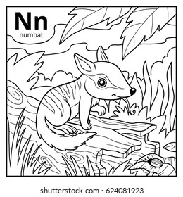 Coloring book for children, colorless alphabet. Letter N, numbat