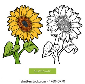 Coloring book for children, flower Sunflower