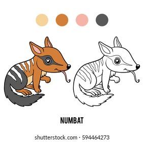 Coloring book for children, Numbat