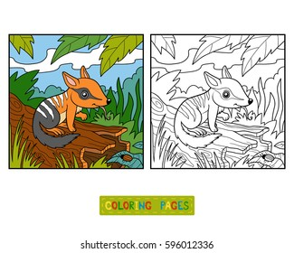 Coloring book for children, Numbat and background
