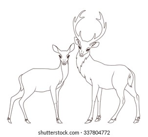 Coloring book: Couple of deers isolated