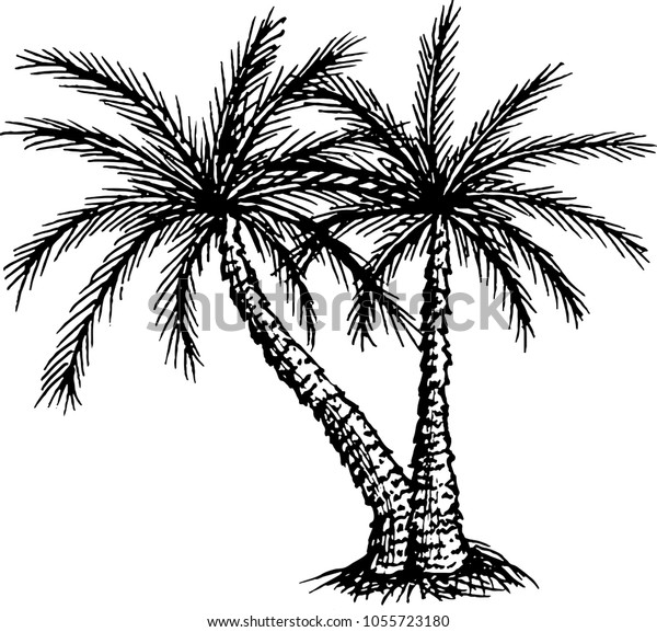 830 Coloring Book Pictures Of Palm Trees Free Images