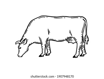 Coloring book. Farm animal. Cow sketch. Hand drawn. Vintage style. Black and white vector illustration isolated on white background.