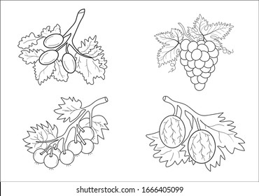 Coloring book fruits for children