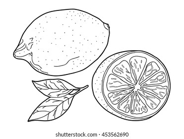 Coloring  book.  Hand drawn. Adults, children. Black and white.  Fruit, lemon,  vector illustration.