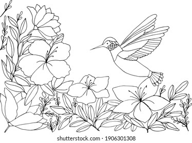 Coloring book with hummingbirds on a floral background. Vector illustration. The flight of a bird. Suitable for greeting cards, games, books, background, design.