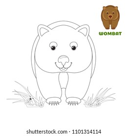 Coloring book page for preschool children with colorful australian Wombat and outlines to color. Vector illustration for kids education and child development. Australian animal.