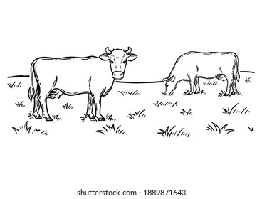 Coloring book. Rural landscape. Cows graze in the meadow. Hand drawn sketch. Vintage style. Black and white vector illustration isolated on white background.
