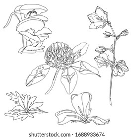 Coloring book. Table Herbarium. Live art. Flowers samples. Garden plants, herbs, flowers for hobby or print.