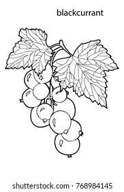 Coloring for children and adults. Healthy food. Berries, black currant.  Black and white vector illustration.