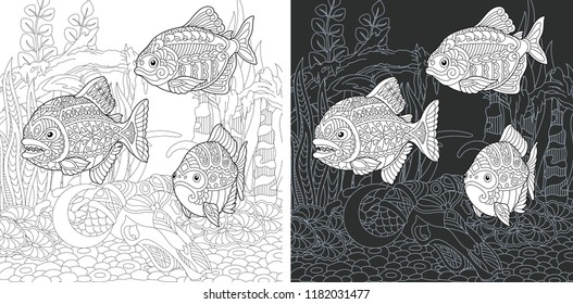 Coloring Page. Coloring Book. Colouring picture with Piranha Fish drawn in zentangle style. Antistress freehand sketch drawing. Vector illustration.