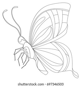 Coloring page - Butterfly. Coloring page with decorative butterflies. Outline hand drawn.
