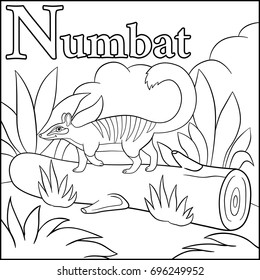 Coloring page. Cartoon animals alphabet. N is for Numbat.
