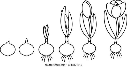 plant reproduction images  stock photos  u0026 vectors