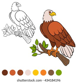 Eagle Coloring Page High Res Stock Images Shutterstock