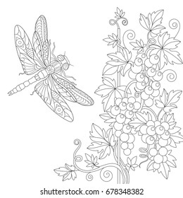 Coloring page of dragonfly and grape vine. Freehand sketch drawing for adult antistress colouring book with doodle and zentangle elements.
