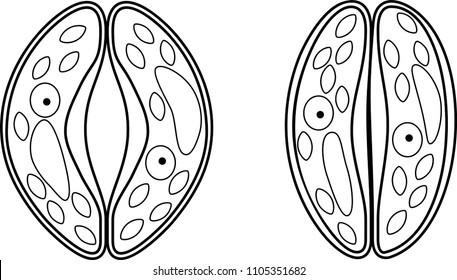 stoma images  stock photos  u0026 vectors