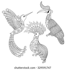 coloring page hornbill hummingbird exotic 260nw