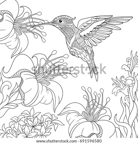 Coloring Page Hummingbird Hibiscus Flowers Freehand Stock Vector