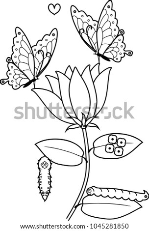 Coloring Page Life Cycle Butterfly On Stock Vector Royalty Free