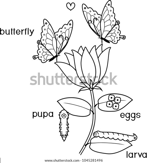 Coloring Page Life Cycle Butterfly On Stock Vector Royalty Free Rhshutterstock: Butterfly Eggs Coloring Pages At Baymontmadison.com