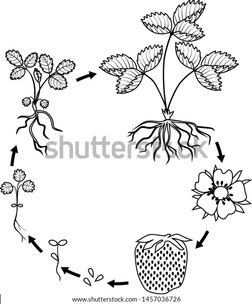 Grow Plant Coloring Page Coloring sheet | Earth day coloring pages, Coloring  pages, Coloring pages nature