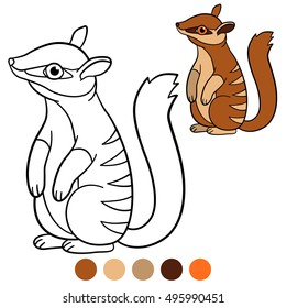 Coloring page. Little cute baby numbat stands and smile.
