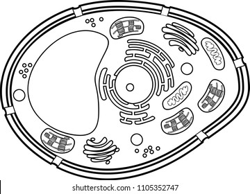 Plant Cell Images, Stock Photos & Vectors | Shutterstock