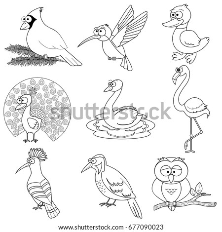 types of birds coloring pages - photo#8