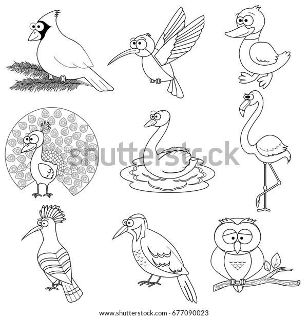 North American animals colouring sheets (SB9074) - SparkleBox ... | 620x600