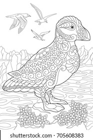 Dinosaurs Vector Illustration Coloring Page Of Puffin A Hole Nesting Auk Seabird Northern And