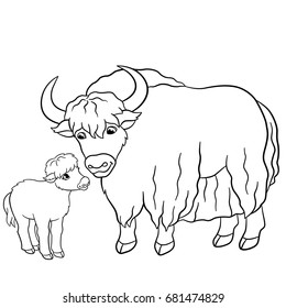 Coloring pages. Beautiful yak with little cute baby yak.
