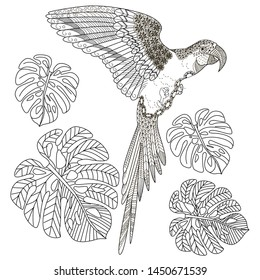 Coloring Pages. Coloring Book for adults and children. Colouring pictures with parrot. Antistress freehand sketch drawing with doodle and zentangle element