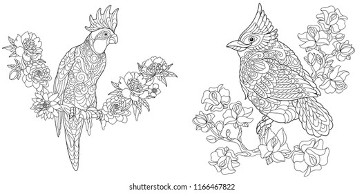 Coloring Pages. Coloring Book for adults. Colouring pictures with cockatoo and red cardinal bird. Antistress freehand sketch drawing with doodle and zentangle elements.