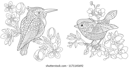 Coloring Pages. Coloring Book for adults. Colouring pictures with kingfisher and canary bird. Antistress freehand sketch drawing with doodle and zentangle elements.