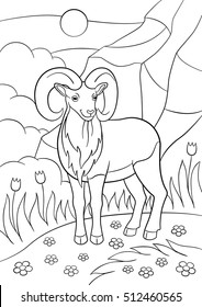 Coloring pages. Cute beautiful urial with great horns stands and smiles.