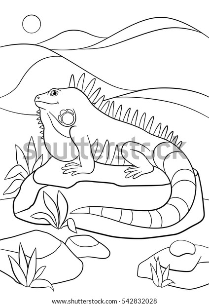 Coloring Pages Cute Iguana Sits On Stock Image | Download Now