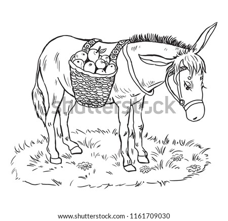 Coloring Pages Kidslittle Donkey Basket Apples Stock Vector Royalty