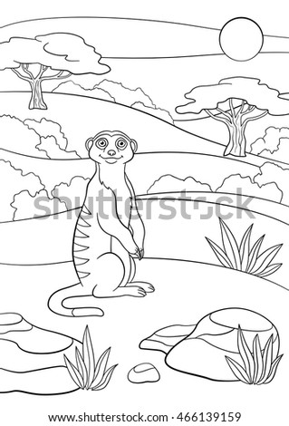 Coloring Pages Little Cute Meerkat