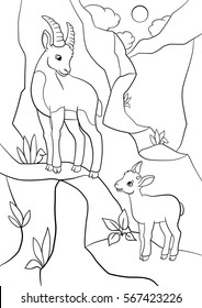 Coloring pages. Mother ibex with her little cute baby ibex on the rock.