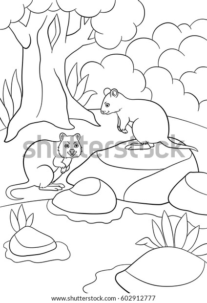 Coloring Pages Two Little Cute Quokkas Stock Vector (Royalty Free ...