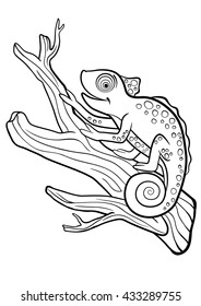 Coloring pages. Wild animals. Little cute chameleon sits on the tree branch and smiles.